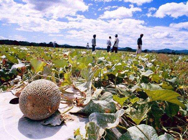 Productores de melón