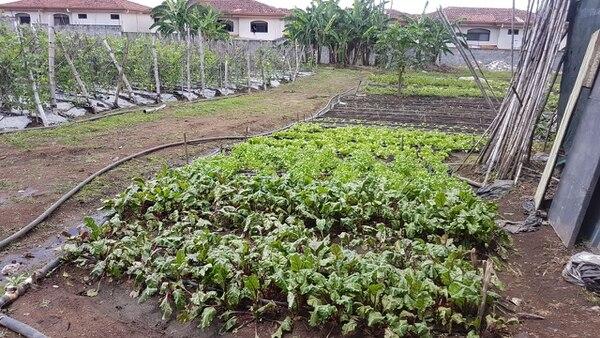 Chile, tomate, cebolla y lechuga son algunos de los productos que la familia vende en la feria del agricultor. (Foto: Familia Guillén Arias para EF).