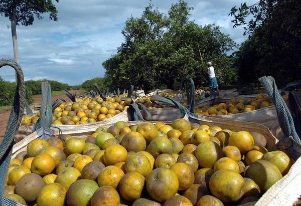 TicoFrut produce 1.500 millones de naranjas y 100.000 toneladas de piña por año.