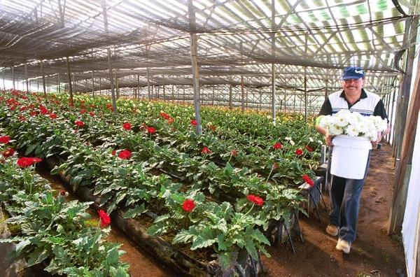 Los empresarios exportadores de flores dejaron de enviar sus productos a Venezuela.