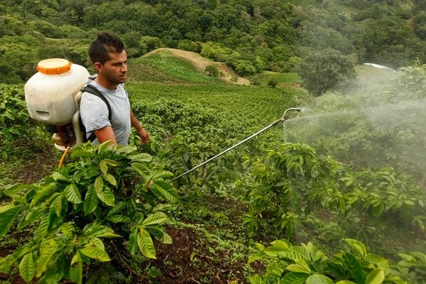 El café ha sido unos de los productos que más se ha visto afectado por los fenómenos naturales en suelo nacional. Los años que más pérdidas registró fueron 2006, 2007 y 2010.