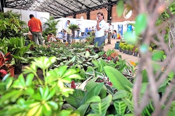 El 50% de la producción de plantas, flores y follajes se exporta a Estados Unidos, el 40% a Europa y el 10% restante a China, Japón y Corea.