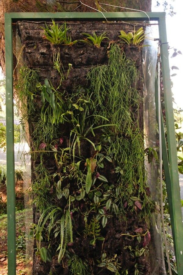 Ricardo Quesada, instala plantas en estructuras verticales.