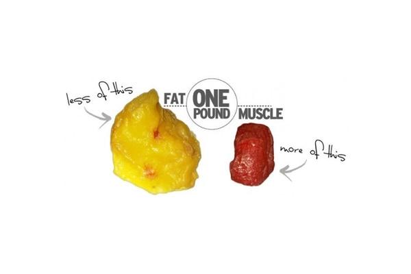 Una libra de músculo se dice que es mucho más activa que una libra de grasa por la diferencia de calorías que consume una versus la otra.