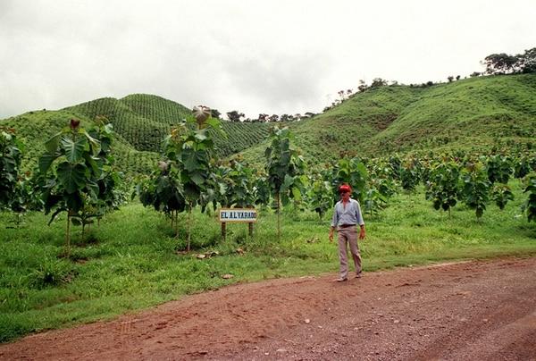 El negocio de la teca emplea a unas 500 personas solo por la cosecha y el transporte, sin considerar la producción de árboles, el establecimiento y el manejo de las plantaciones forestales.