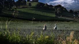 MAG se propone concretar decreto en tres meses para agilizar inscripción de agroquímicos
