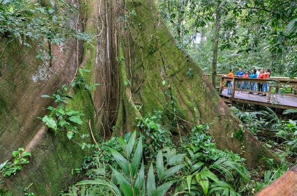 Cinco Ceibas ofrece recorridos por senderos en la montaña. La empresa también se dedica a reforestar.