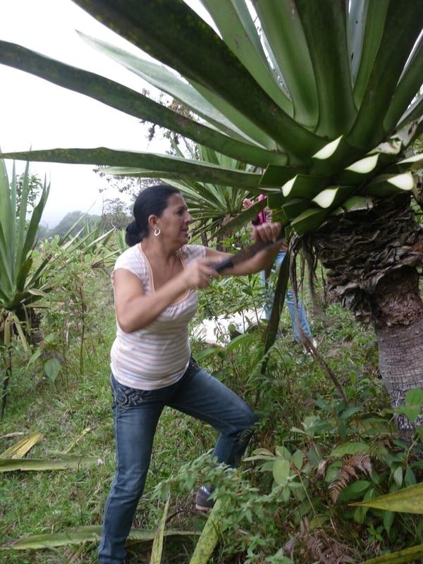 Blanca Padilla tiene sus propias plantas de cabuya en su hogar. (Cabuyando para EF).
