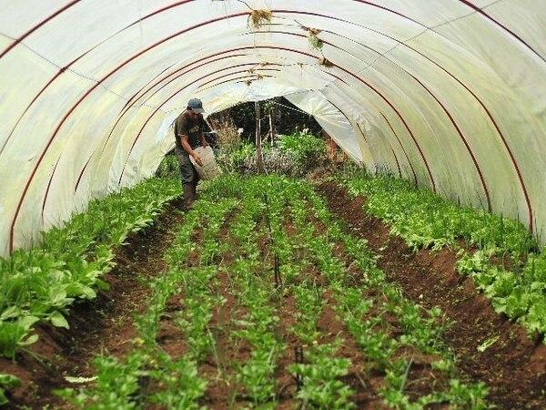 Acciones como mejorar las condiciones de los cultivos, son parte de los proyectos que apoya la iniciativa de Fundecoperación para el Desarrollo Sostenible. Foto archivo LN con fines ilustrativos