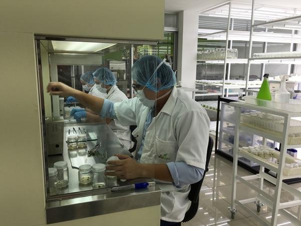 AgroVitro opera en San Isidro de Heredia. En la pyme laboran cinco personas.
