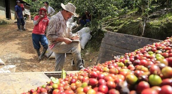 Recolección de café en Costa Rica.