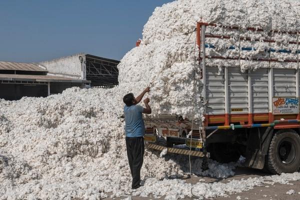 Un trabajador descarga algodón crudo de un camión en la fábrica de algodón Radhe Industries en Kadi, estado de Gujarat, India, el 23 de noviembre de 2018. Fotografía: Rebecca Conway / The New York Times.