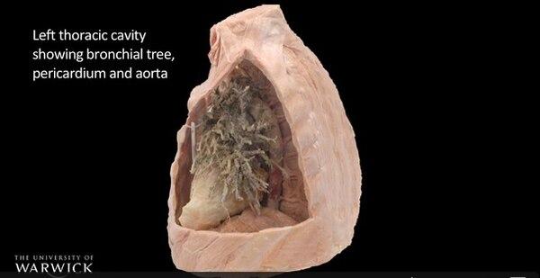 WMG y la Escuela de Medicina de Warwick utilizan los dibujos originales de Leonardo Da Vinci de la anatomía humana para crear modelos 3D