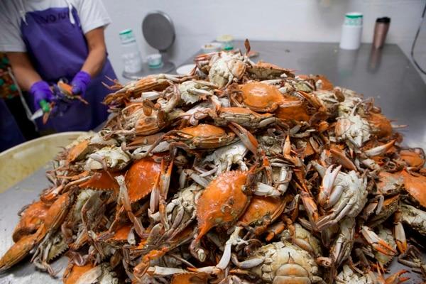 Wonn Kain procesa cangrejos en Bay Hundred Seafood en St. Michaels, Maryland, el 7 de octubre de 2020. Fotografía: AFP.