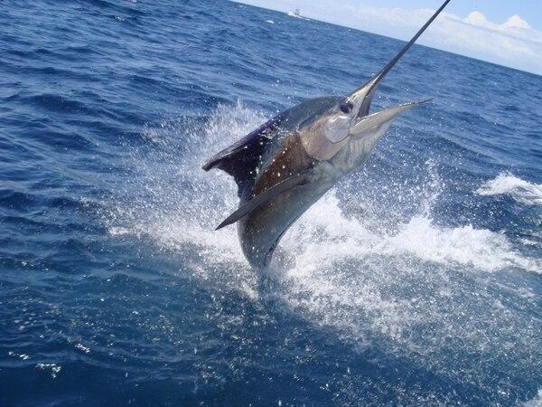Esta es la tercera vez que se lleva a cabo el Torneo Internacional de Pesca Deportiva en Costa Rica.