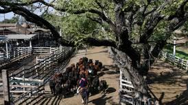Ganaderos de Argentina saltan a huelga y detienen venta de ganado vacuno como medida contra la suspensión de exportaciones de carne