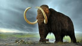 """EF Explica: Desextinción, ¿en qué consiste la tecnología con la que científicos esperan """"revivir"""" al mamut?"""