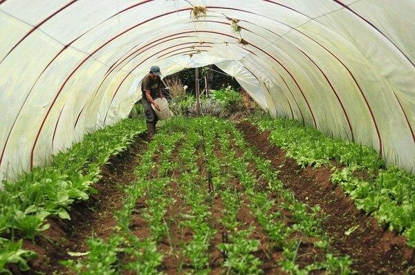 Varios sectores agrícolas participan en el proceso de consulta pública para revistar la norma de agricultura sostenible de Rainforest Alliance