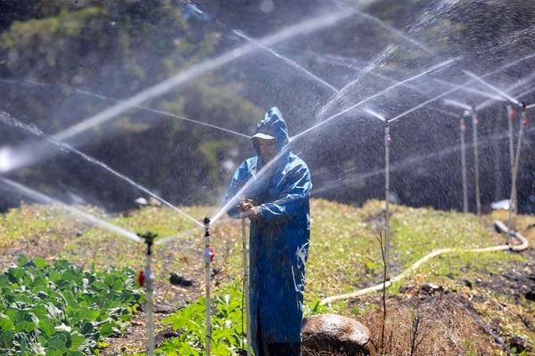 Con sensores se puede automatizar el riego. (Foto Rafael Pacheco / Archivo GN)