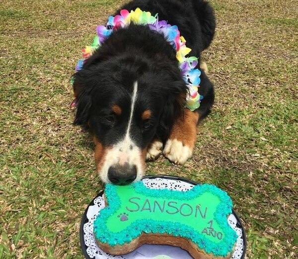 La empresa vende diferentes paquetes para celebrar los cumpleaños de los perros. Estos incluyen queque para el cumpleañero, cupcakes, galletas y sombreros para los perros invitados a la fiesta. Foto: Guau Bakery para EF.