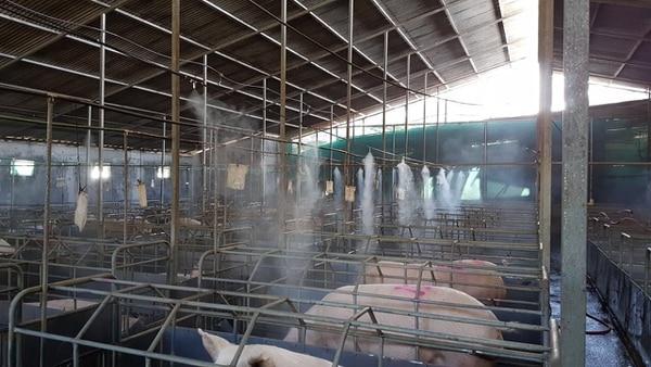 Los sistemas de desinfección son utilizados en plantas agroindustriales. (Foto cortesía IGC)