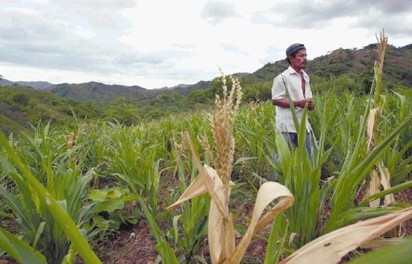 Afectación de cultivos, pérdidas en el sector ganadero y pérdidas económicas preocupan a diferentes sectores en Nicaragua.