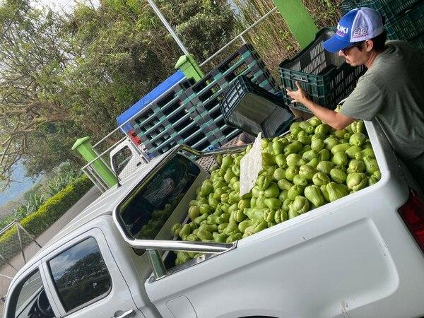 Nueve empresas exportadoras de chayote, ubicadas en Ujarrás, enviaron su producto a las familias necesitadas. Fotos: Cortesía de Cadexco