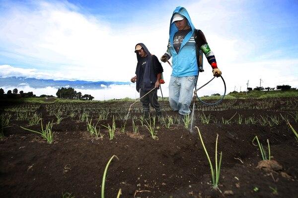 Fumigación de cultivos en Llano Grande de Cartago / fotografía: John Durán