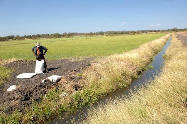 Terreno inseguro. Conarroz estima que solo entre un 10% y un 15% de las 52.000 hectáreas de arroz sembradas en el país están aseguradas. Por esto, los productores piden un subsidio estatal a las primas para abartar sus costos.